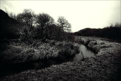 .. (Trees n stuff) Tags: bw wales river landscape toned dyffryn goodwick d80 floppyboot