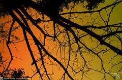 Morning Sun Light  at Sylhet