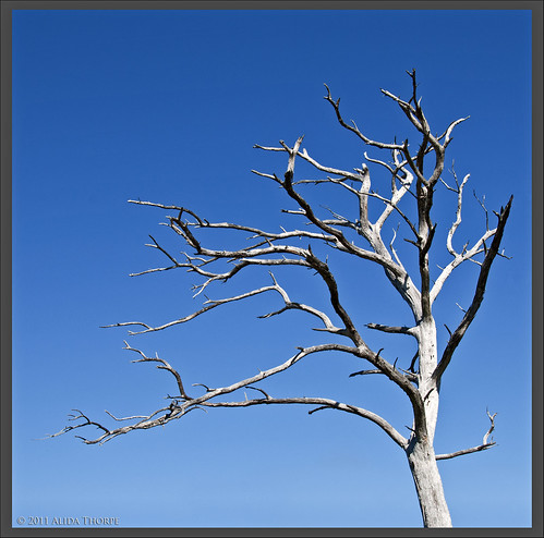 bare tree by Alida's Photos