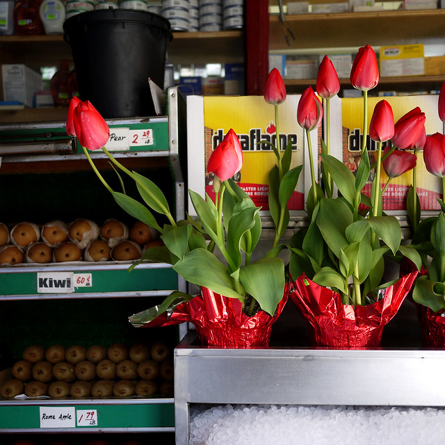 Tulips & ice outside a bodega on Thompson st #walkingtoworktoday