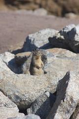 IMG_4944 (conallob) Tags: california road trip beach bug 1 coast big highway squirrel pacific route pch sur rte