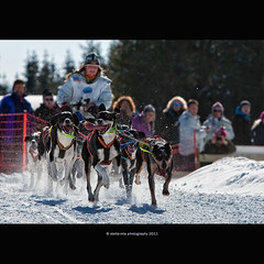 WCh at Hamar (stella-mia) Tags: winter dog snow dogs norway highlight sleddog hamar sn 70200mm wch canon5dmkii wchathamar