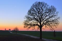 En attendant la pleine lune (pierre hanquin) Tags: sunset color tree geotagged nikon belgium belgique pierre arbre hannut d7000 hanquin