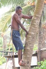 Negombo, Sri Lanka_20110108_003 (HAKANU) Tags: man tree beach geotagged climb coconut muscle palm climbing palmtree srilanka ceylon biceps bulge negombo arborist plugger mygearandme coconutplugger