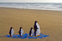 (Khuroshvili Ilya) Tags: sea india art festival canon landscape penguins goa concept arambol nvbr nvbr11