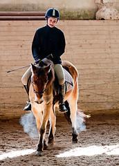 Team Hstliv Siljan (G Er Foto) Tags: horse hero superhero hst rttvik dressyr herowinner ridklubben teamhstlivsiljan rfkbild1104