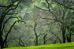 In the Spring Hills (andertho) Tags: california trees green delete9 joseph delete5 delete2 delete6 d delete7 grant sanjose save3 delete8 delete3 save7 save8 delete delete4 save save2 save9 save4 santaclara save5 save10 save6 sfist save11 josephdgrantcountypark savedbythehotboxuncensoredgroup