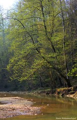 Spring (Moein Mn) Tags: wood tree green river spring silent iran mazandaran  hdr  moein          savadkooh shirgah   moeinmohammadnejad   andarkeli endargoli
