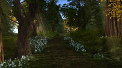 Full Bloom (alexandriabrangwin) Tags: alexandriabrangwin secondlife 3d cgi computer graphics virtual world photography calas galendon park nature sim beautiful scenery godrays forest grass flowers trees trail walking depth field blur focus wilderness