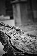 Cello lament (Mister Blur) Tags: prelachaise cimetire stone cello grave blackandwhite nikon d7100 50mm 18 bokeh paris