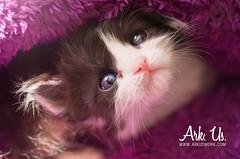Rogue (Ark. Us.) Tags: cute kitty kitten portrait black white baby cat purple light adorable