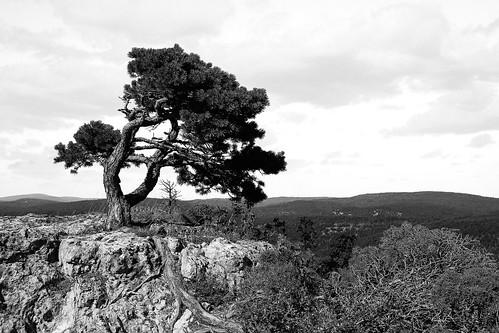 2016_AveyronMontpellierLeVieux-10