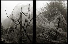 Jewel grid (efo) Tags: bw water fog diptych dew halfframe jewels multiframe birdnetting olympuspens