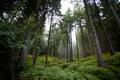 Foggy Woods (Pete-MaCanon) Tags: camera forest canon landscape photography scotland long exposure flickr anger peter aberdeen mackinnon bonkers newsworthy 5dmk2 10secondsofpurepleasure