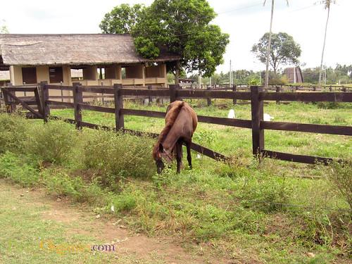 Hacienda San Benito-horse