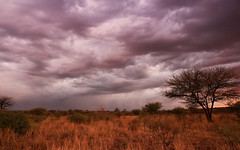 Cloudy Evening [Explored] (Sandeep Thoppil) Tags: africa landscape bush tour reserve safari namibia explored