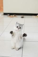 D7M_1020 (archiwu945) Tags: cat nikon dslr 寵物 貓 d700 taleofthecat zeissplanart1450zf2