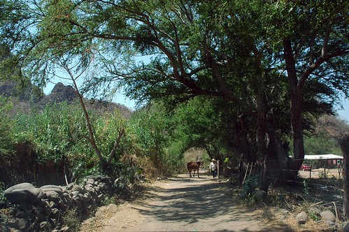 Horse and cowboy, on a rural dirt road, entrance to swimming hole, shade trees, rock fence, foothills, desert oasis, San Cristobal de la Barranca, Jalisco, Mexico by Wonderlane