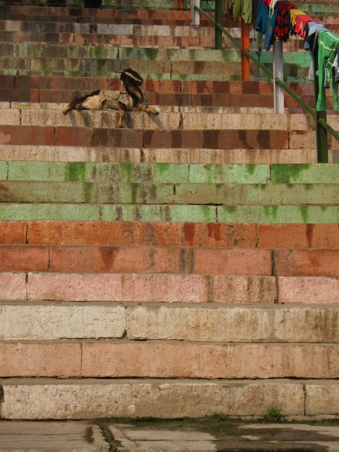 Ghat steps with goat
