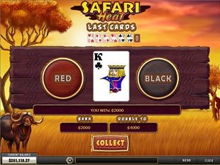 free Safari Heat slot gamble feature