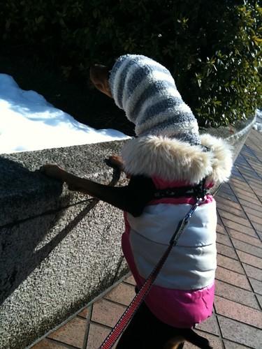雪だるまにむかって威嚇する黒犬。