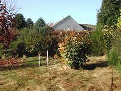Garden As Existing