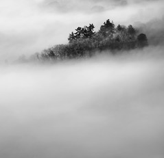 Emerging (@Gking_photo) Tags: trees winter england blackandwhite mist abstract monochrome weather silhouette fog rural landscape photography mono cornwall imac squareformat westcountry canon1740mmf4l 2011 canon5dmkii