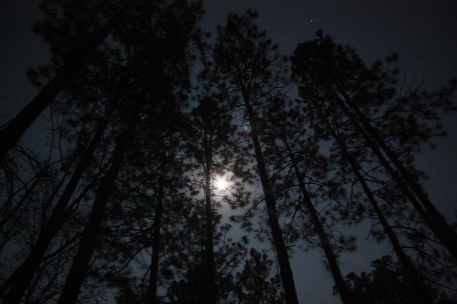 trees_moon