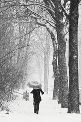((:Andrzej:)) Tags: trees winter bw umbrella bravo walk parasol zima spacer drzewa zielonagra magicunicornverybest magicunicornmasterpiece