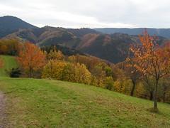 PICT0007 (Christian_SXB) Tags: oppenau sw007