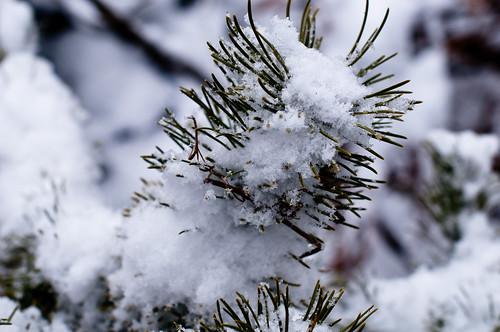 Snow end Feb 017