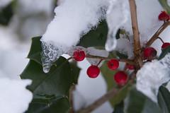 stritz-4084.jpg (jstritz) Tags: park winter leaves fhsp