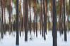 In the Forest (mmoborg) Tags: trees abstract blur forest sweden skog sverige dalarna träd abstrakt oskärpa 2011 cameramove rörelseoskärpa thepinnaclehof mmoborg mariamoborg tphofweek97 tphofscore5008