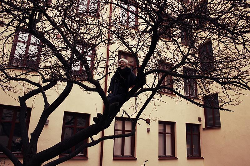 Iris i ett träd