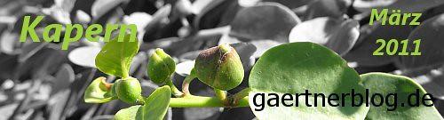 Garten-Koch-Event März 2011: Kapern [31.03.2011]