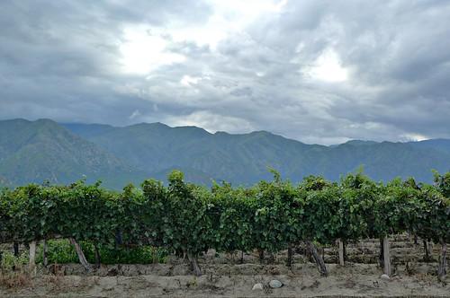 Vineyard - Cafayate, Argentina