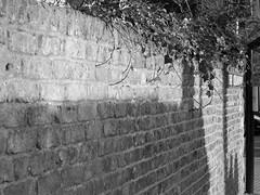Chanonry (Rosa Alba Macdonald) Tags: shadow sun heritage wall scotland ivy aberdeen listedbuildings oldaberdeen