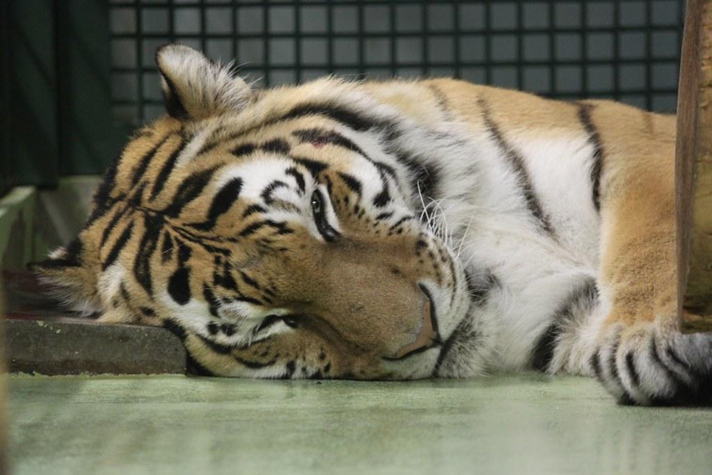 Sapporo Maruyama Zoo (12)