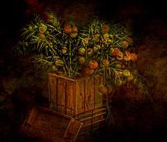 Jesse's planter....... (jcmphoto1) Tags: magicunicornverybest selectbestexcellence magicunicornmasterpiece sbfmasterpiece