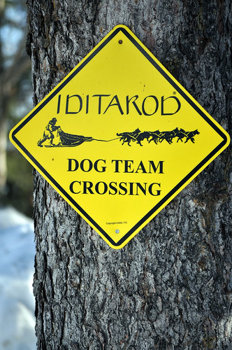 Dog Team Crossing