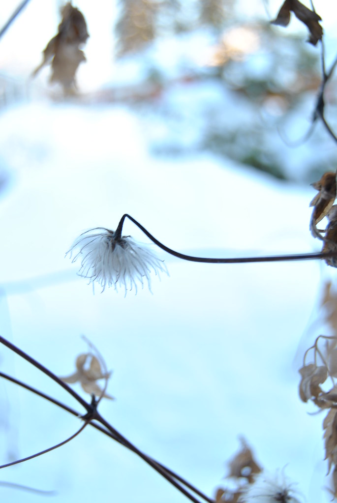 20110126 - winter 078