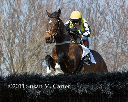 So Amazing steeplechase horse racing