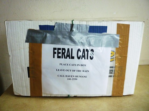 FERAL CATS: Place cats in box. Leave out of the rain. Call Haven Humane 241-2550.