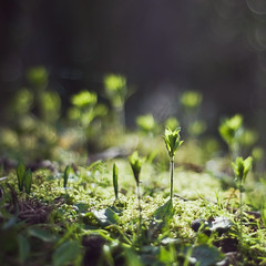 illumination (Suzi Marshall) Tags: wood winter plants sunlight green forest 50mm moss floor seedlings signsofspring