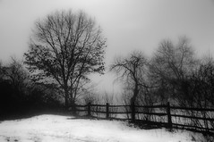 Trees and Fence in a Misty Field (briburt) Tags: trees winter blackandwhite bw mist snow cold nature monochrome field misty fog rural fence walking landscape grey countryside nikon cloudy hiking snowy path massachusetts country gray foggy newengland ground woodenfence mysterious mystical haunting hikers concord ghostly treeline walkers fenceline wintry d90 nikond90 flickrdiamond northofnormal briburt