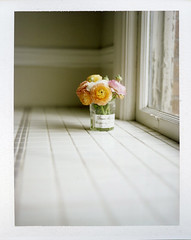 repurpose (*Cinnamon) Tags: flowers window polaroid ranunculus instant fujifp100c polaroid110b peelapartfilm btwhappyfirstdayofspring