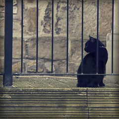 black cat awareness day (Black Cat Photos) Tags: street uk portrait england pet house cute love halloween animal cat fence blackcat mammal photography march photo cool europe solitude sitting loneliness looking witch character yorkshire fear watching pussy leeds relaxing citylife adorable kitty icon m spooky whiskers celebration deck attitude chilling fantasy myhouse stunning environment unwanted british athome spirituality elegant awareness decking superstition pussycat sleek perfection britian familiar guarding contemplation chatnoir elegance streetshot petportrait individuality puddy familypet forecasting luckyblackcat rodley coolattitude blackcatphotos blackcatawarenessday blackcatcrossesyourpath