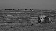 DSC_0046_0045 byn (Fran Villalba) Tags: palomar zamora palomares tierradecampos villarrndecampos
