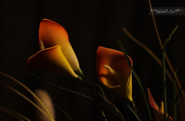 IMAGE: http://farm6.static.flickr.com/5296/5566116936_f6fd49d1e1_z.jpg