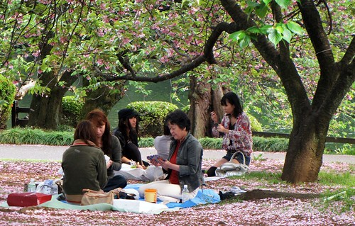 Shinjuku Gyoen National Garden - Fading Cherry Blossoms